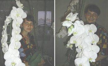 Geniálny trik ako vypestovať tú najkrajšiu orchideu ako na obrázku, ktorá Vám zaručené pokvitne!